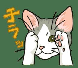 NO CAT NO LIFE Satowo cat stamp2 sticker #196194