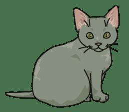 NO CAT NO LIFE Satowo cat stamp2 sticker #196195