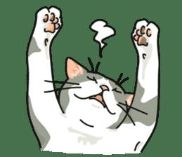 NO CAT NO LIFE Satowo cat stamp2 sticker #196200