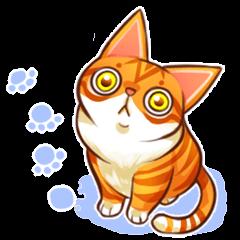 Budwei Cat
