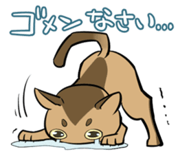 Abyssinian's hinata sticker #206336