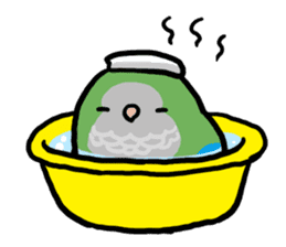 pet birds sticker #209881