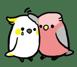 pet birds sticker #209897