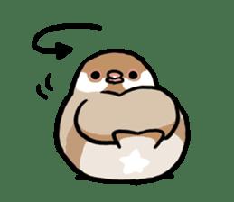 pet birds sticker #209904