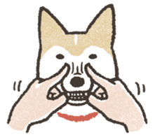Shiba Inu (Shiba-Dog) stickers sticker #888287