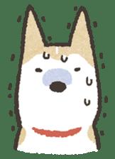 Shiba Inu (Shiba-Dog) stickers sticker #888293