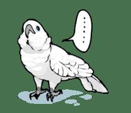 Mischievous parrot sticker #8562215