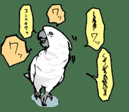 Mischievous parrot sticker #8562222