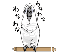 Mischievous parrot sticker #8562226