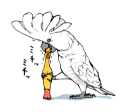Mischievous parrot sticker #8562231
