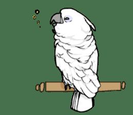 Mischievous parrot sticker #8562239
