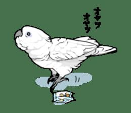Mischievous parrot sticker #8562241