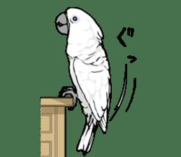 Mischievous parrot sticker #8562245