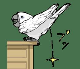 Mischievous parrot sticker #8562246