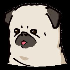BOBO Pug's life