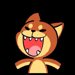 A mischievous little dog! (Shiba Inu)