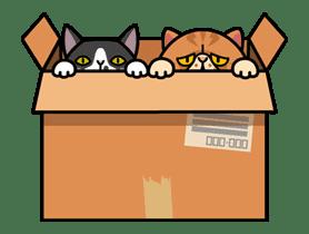 Meow Me 3 sticker #12909