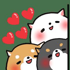 The lovely Japanese Shiba inu
