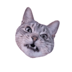 Photo stickers of expressive cats
