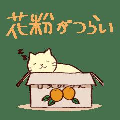 Sleep cat2