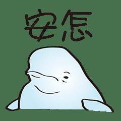 cute beluga whale