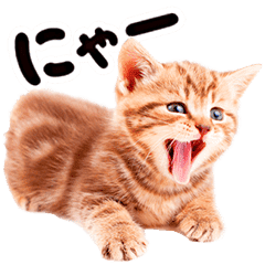 Cat Photo Stickers 07